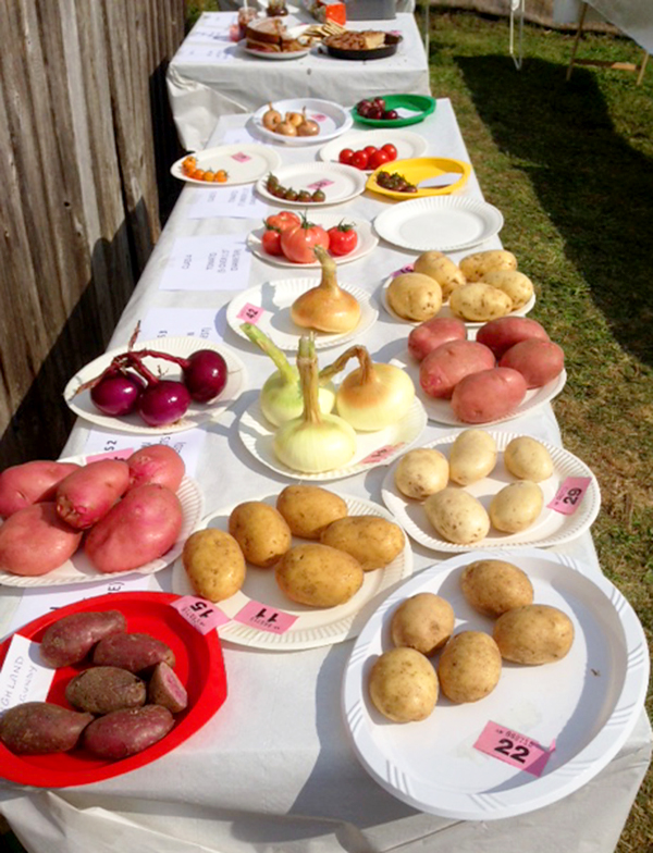 Arranging the show tables. The potato category was popular.