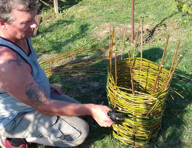 Step 2: Once the 'stakes' are in place the weaving can begin. This is done with thinner flexible willow rods called 'strands'. For this quick basic demonstration green 'strands' were used. Normally you would use prepared rods that have been dried and then soaked in water to become pliable. The green 'strands' may start to grow some leaves, which would look rather nice.