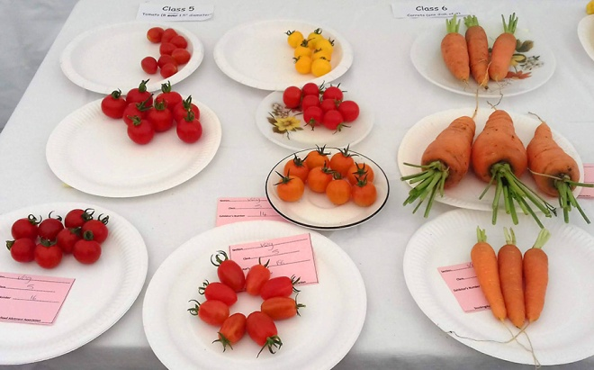 A very impressive selection of tomatoes and carrots.