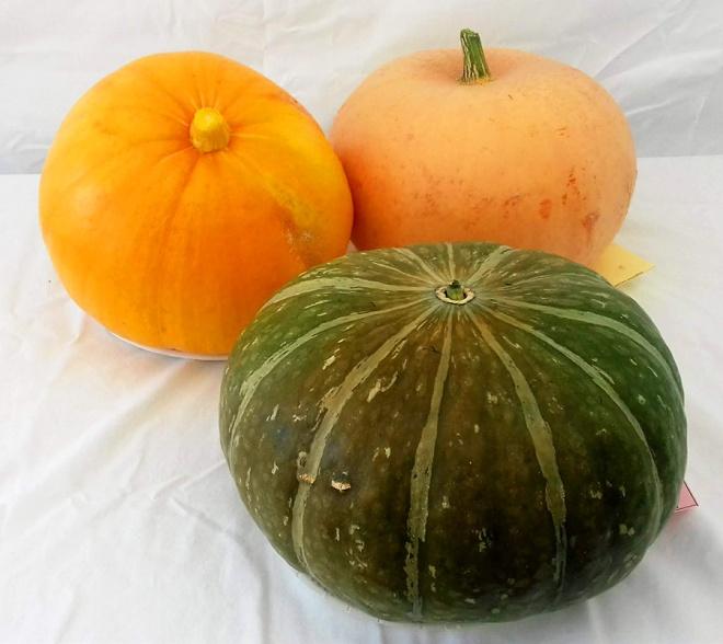 A trio of impressive pumpkins.