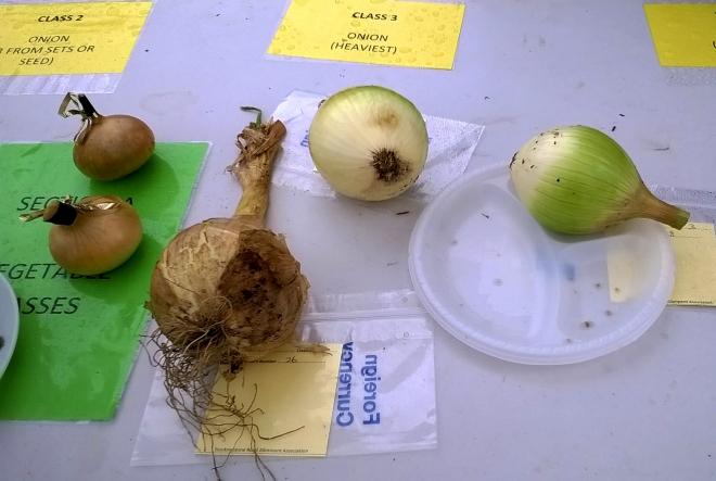 Heaviest Onion Category: A very close contest.