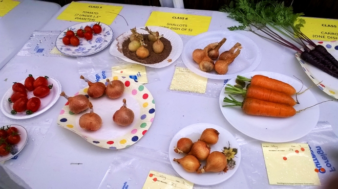 Entries in the shallot category, with some handsome carrots and tomatoes getting a look-in.